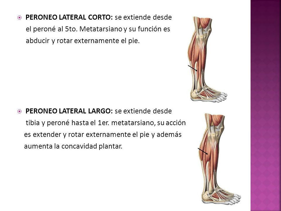 MUSCULOS. - ppt video online descargar