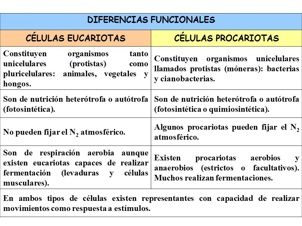 La célula y el Núcleo IES Bañaderos. - ppt video online descargar