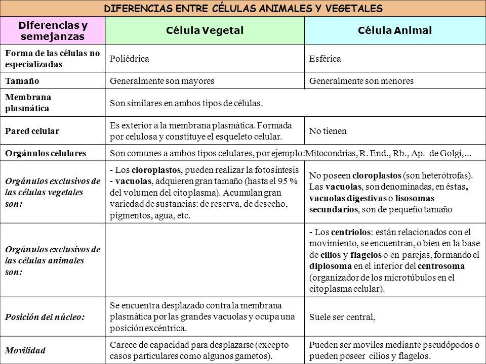 Encantador Anatomía Célula Animal Inspiración - Anatomía de Las ...