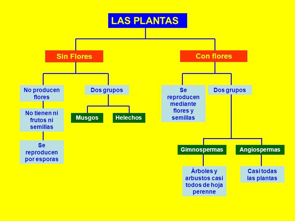 Las Plantas Ppt Video Online Descargar