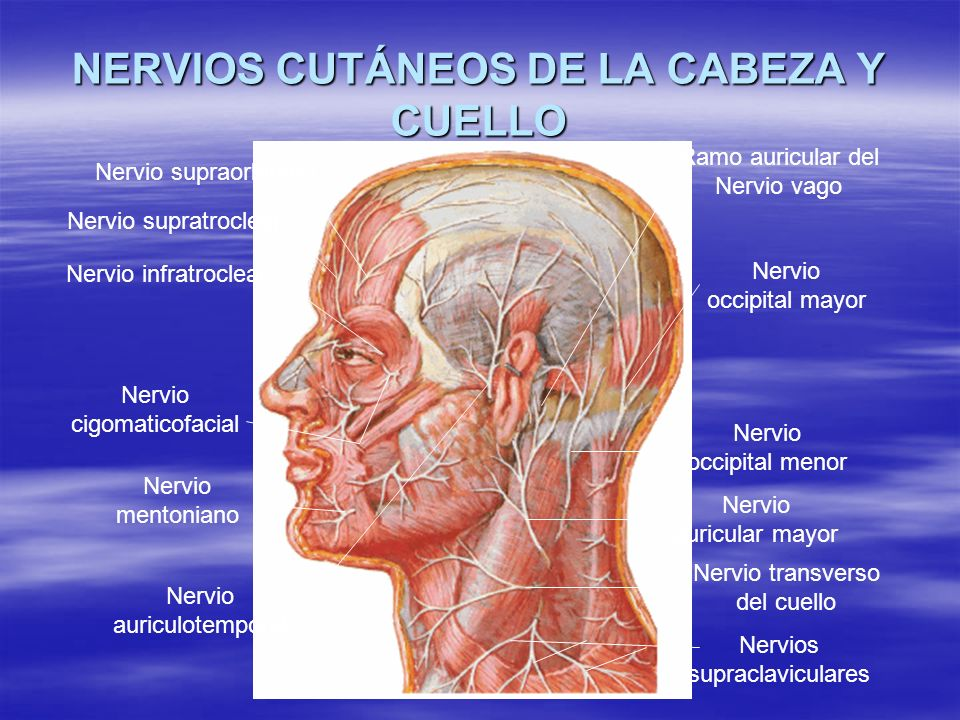 Dr. Paúl Mendoza Murillo - ppt video online descargar