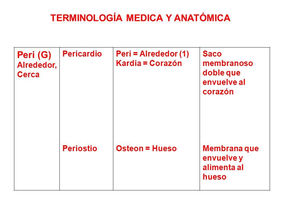 Excepcional Terminologías En La Anatomía Composición - Imágenes de ...