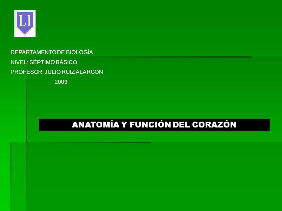 ANATOMÍA Y FUNCIÓN DEL CORAZÓN - ppt descargar