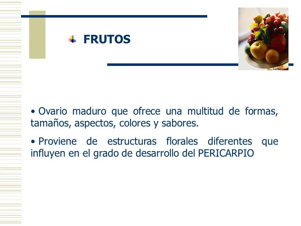 Las frutas y hortalizas. - ppt video online descargar