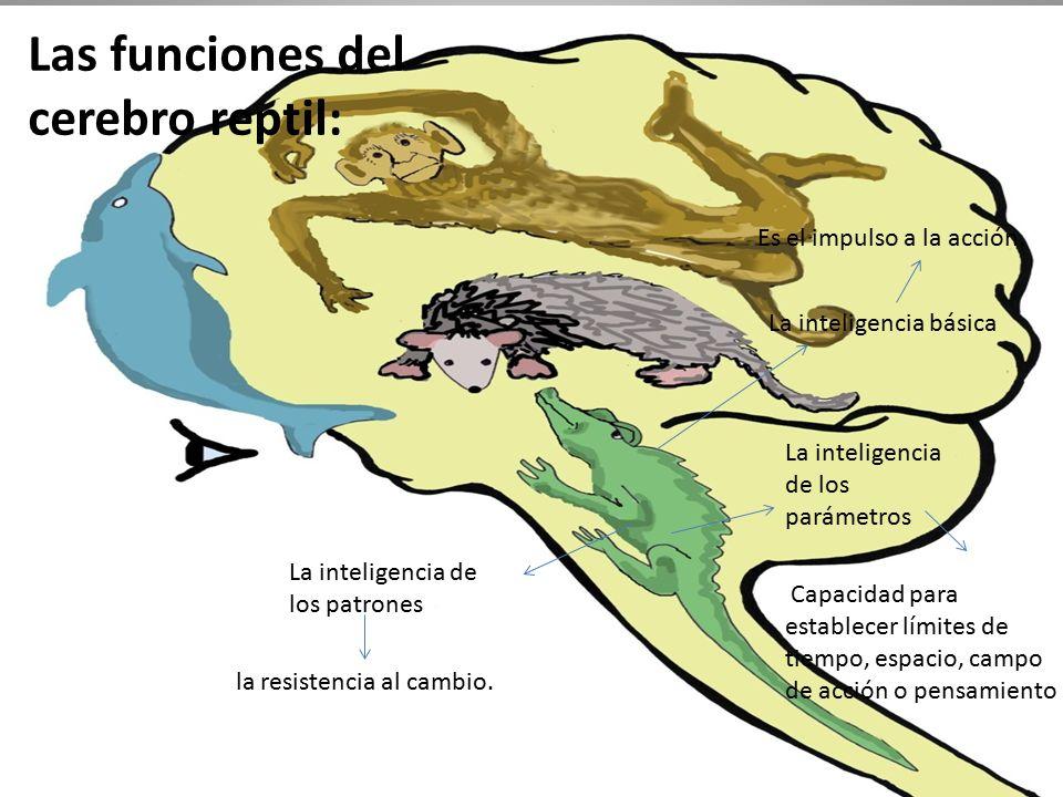 Increíble Reptil Anatomía Del Cerebro Molde - Imágenes de Anatomía ...
