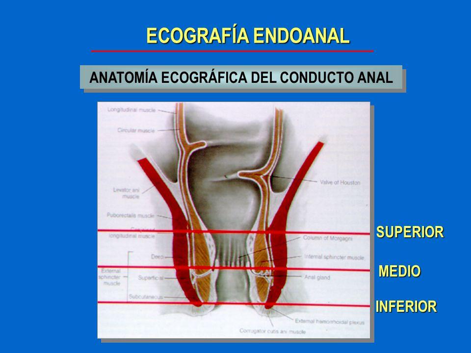 Moderno Anatomía Del Canal Rectal Galería - Anatomía y Fisiología ...