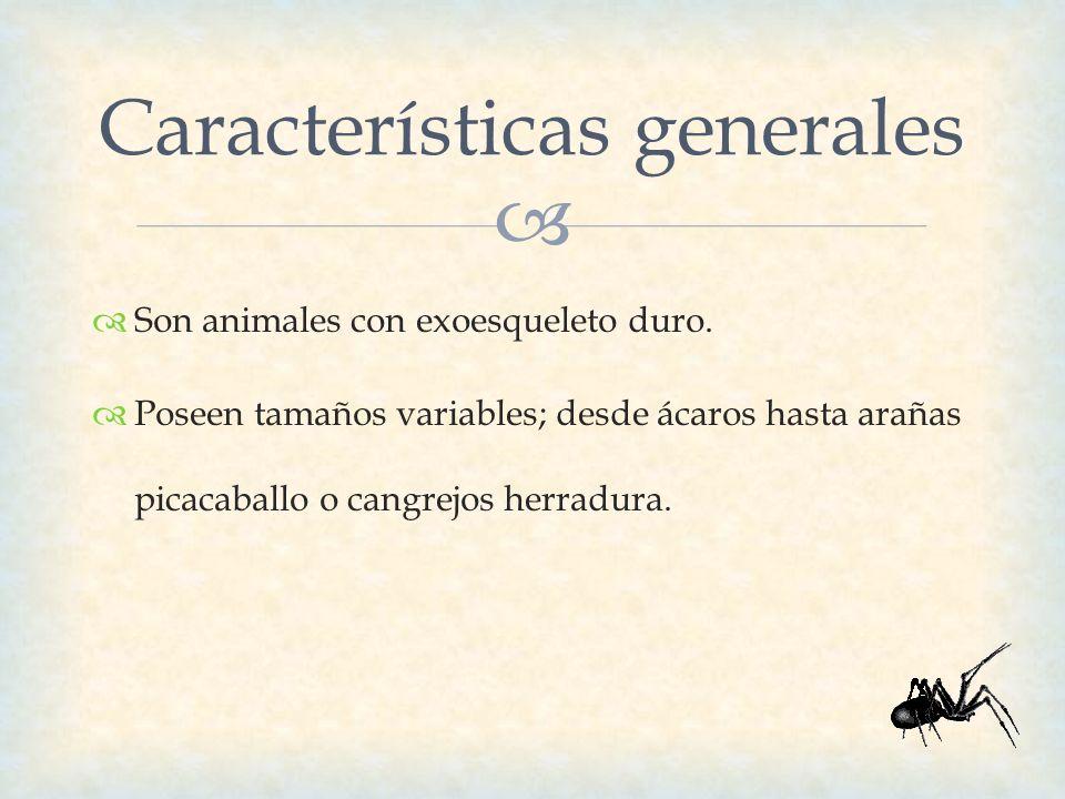 Encantador Anatomía Del Cangrejo De Herradura Friso - Anatomía de ...