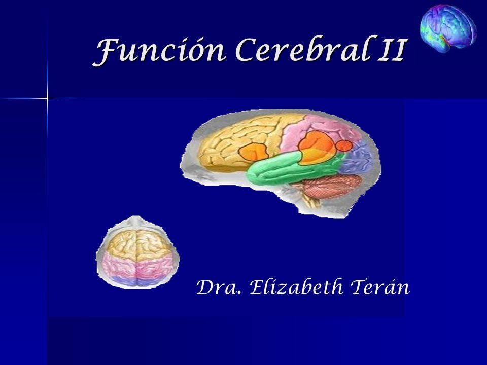 Función Cerebral II Dra. Elizabeth Terán. - ppt descargar
