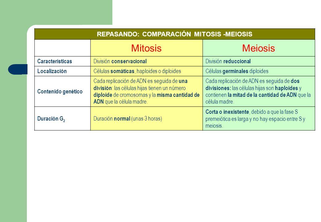 El ciclo celular La meiosis - ppt descargar