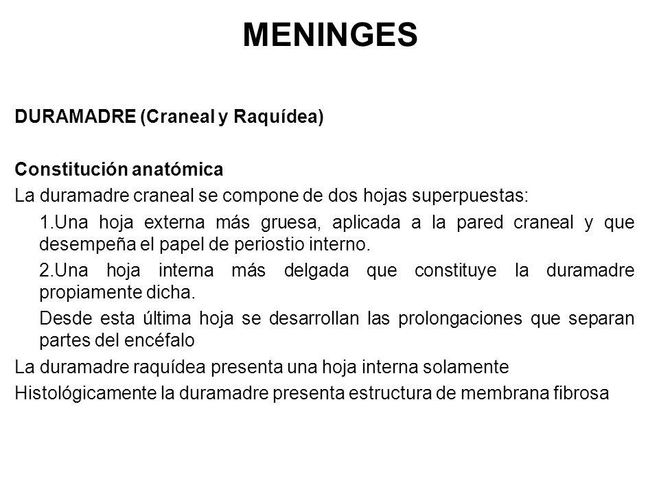 Morfología-Electiva TEJIDO NERVIOSO Dr. Ariel D. Quiroga Electiva ...