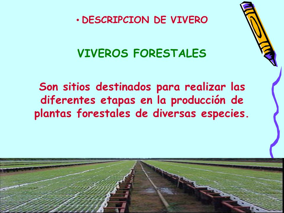 DESCRIPCION DE VIVERO VIVEROS FORESTALES.