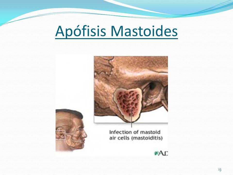 Anatomía y Fisiología del Oído - ppt descargar