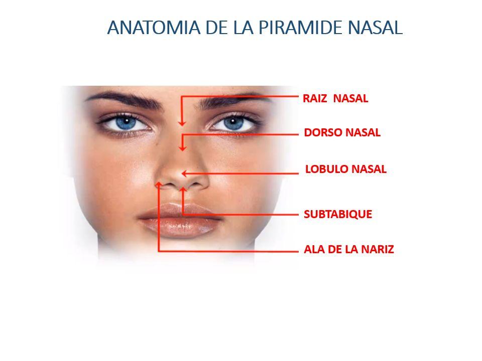 Perfecto Anatomía Nasal Ala Colección de Imágenes - Anatomía de Las ...