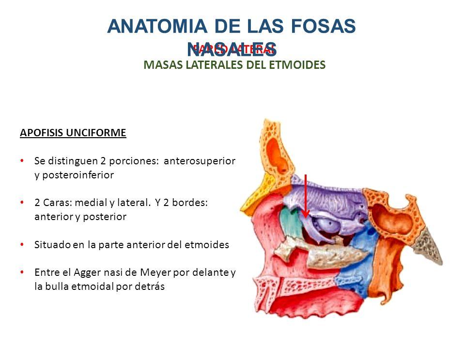 Excepcional Lo Que Es Medial Y Lateral En La Anatomía Regalo ...