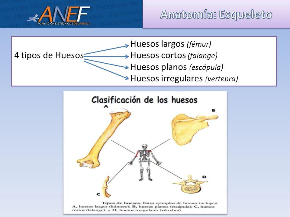 Perfecto AnatomÃa De Una Hoja De Cálculo De Los Huesos Largos ...