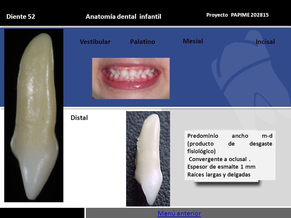 Lujoso Anatomía Dental Y Fisiología Embellecimiento - Anatomía de ...