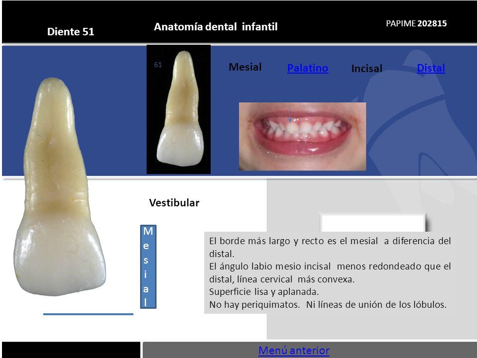 Anatomía dental infantil - ppt descargar