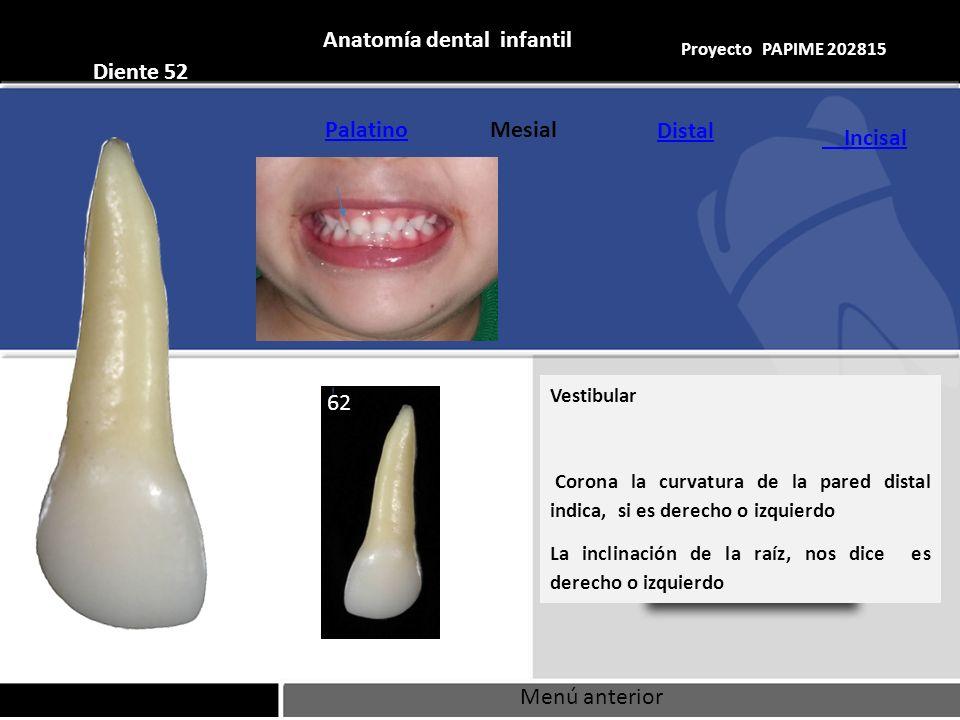 Contemporáneo Anatomía De La Raíz Dental Foto - Imágenes de Anatomía ...