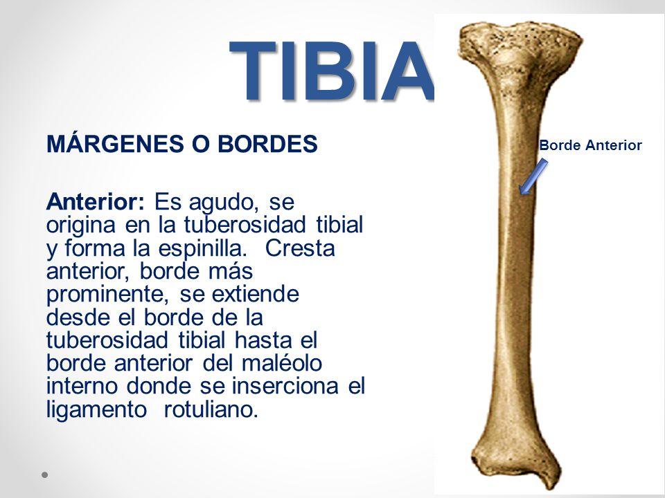 Famoso Diagrama De La Anatomía Tibia Friso - Imágenes de Anatomía ...