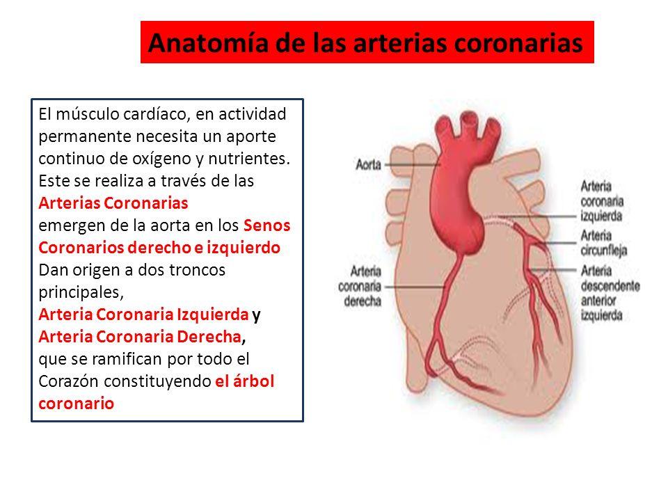 Famoso Arteria Coronaria Diagrama Anatomía Cresta - Anatomía de Las ...