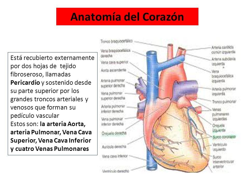 Sistema Cardiovascular Corazón - ppt video online descargar