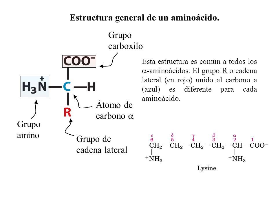 Proteínas De Transporte Proteínas Nutrientes Y De Reserva