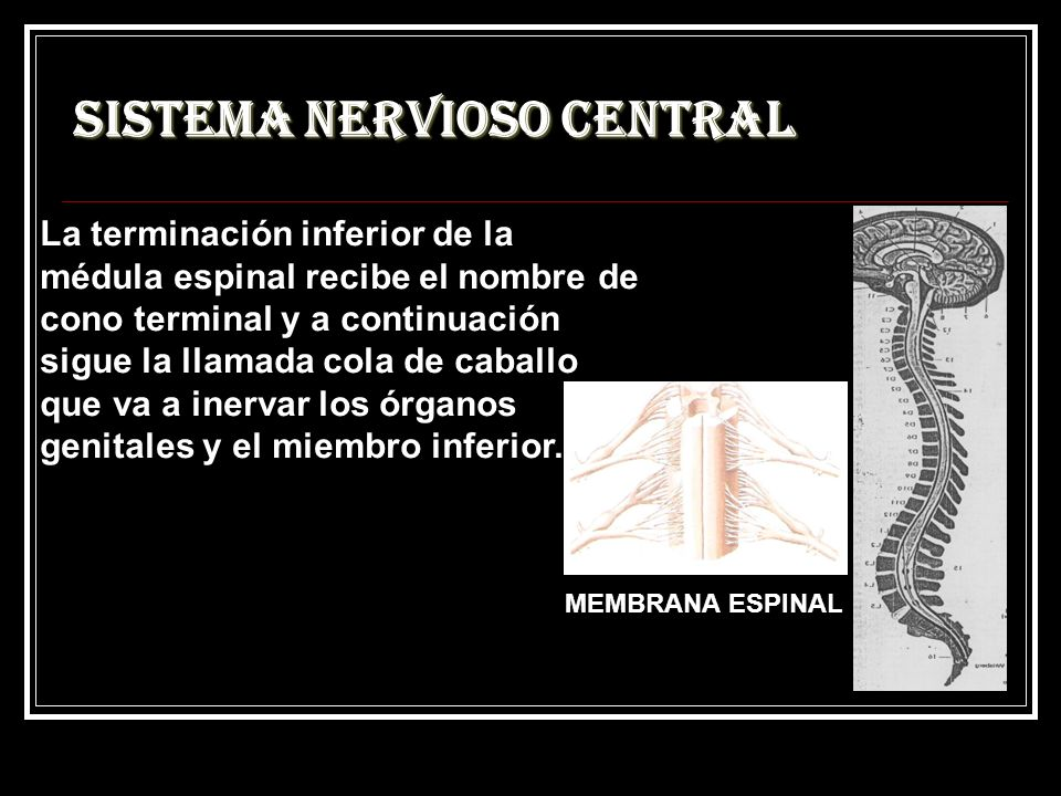 Magnífico La Anatomía Del Miembro De Caballos Festooning - Imágenes ...