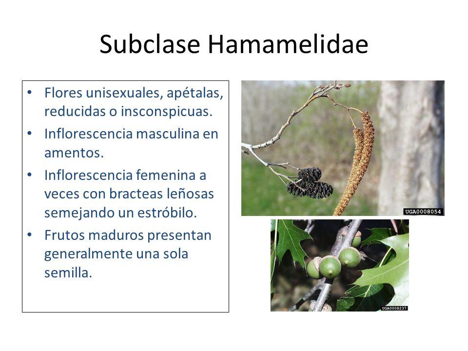 Subclases De La Clase Magnoliopsida Ppt Descargar