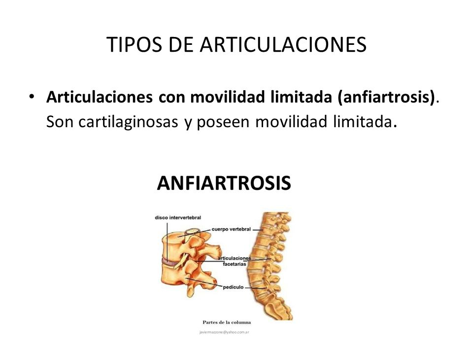 Anatomía de las articulaciones - ppt video online descargar
