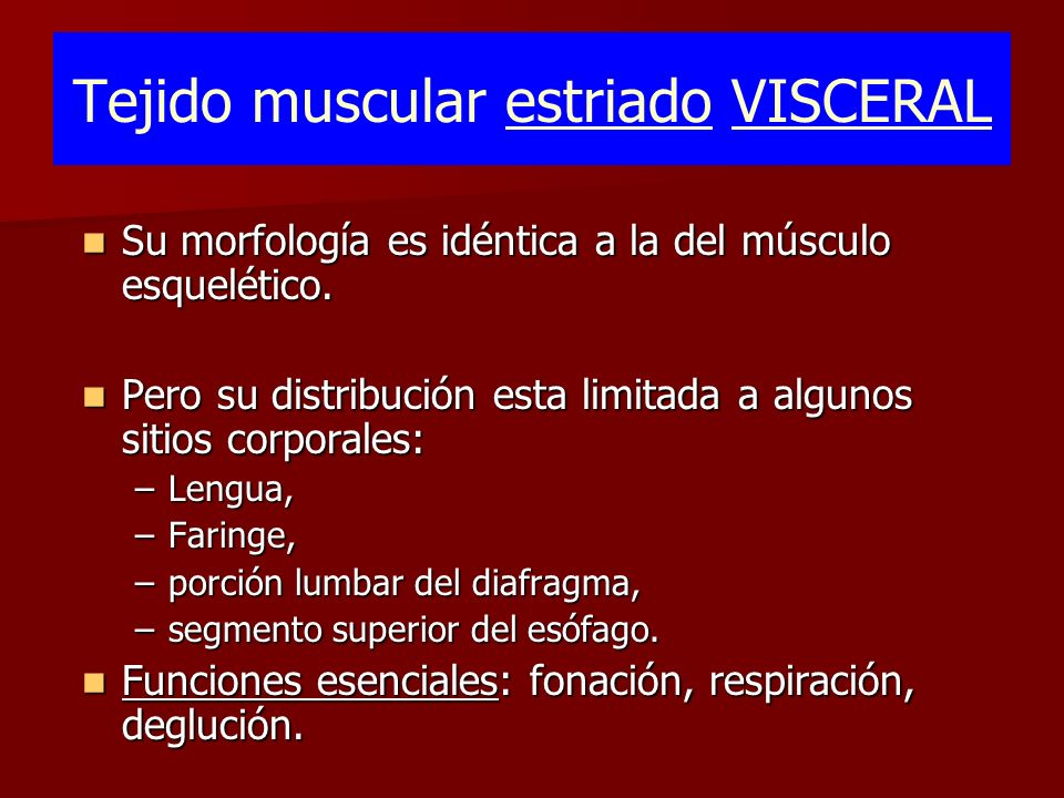 Tejido muscular estriado VISCERAL