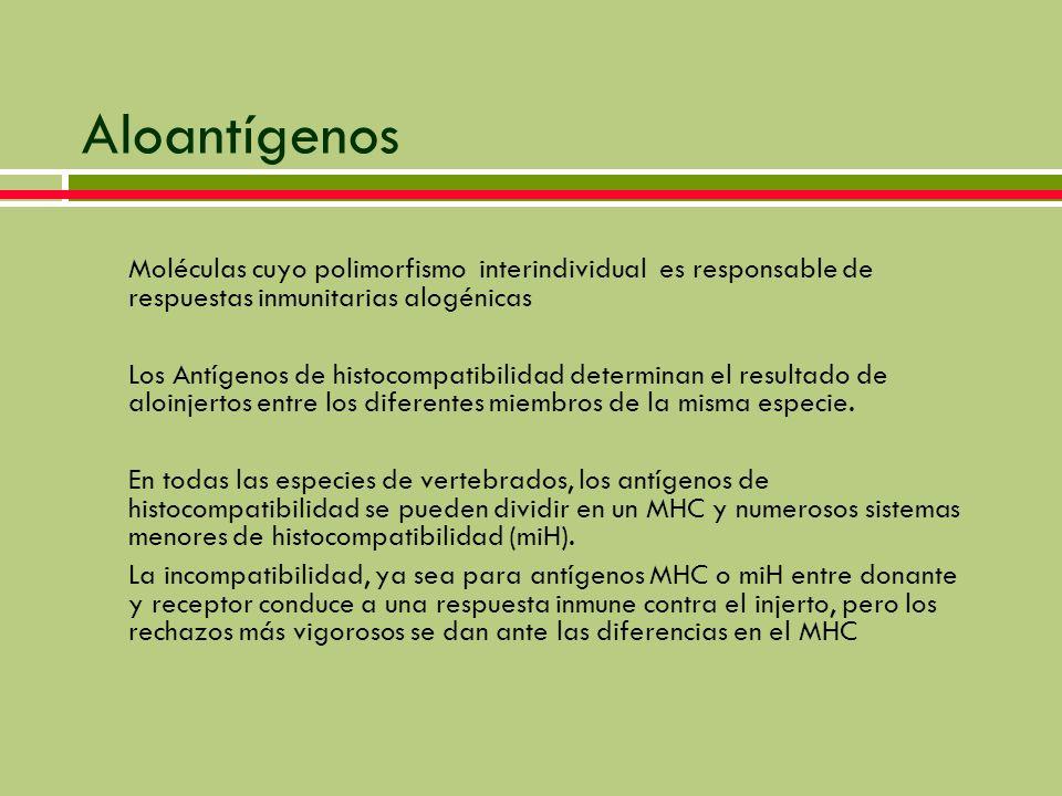 Diálisis y Trasplante Renal Generalidades - ppt video online descargar