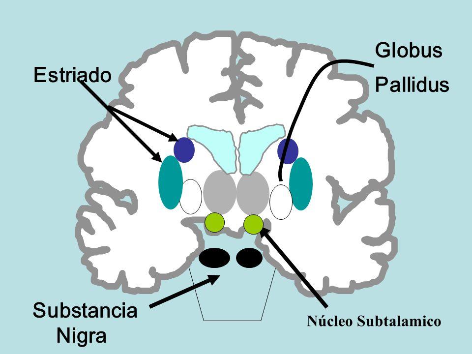 GANGLIOS BASALES Los ganglios basales representan a un conjunto de ...