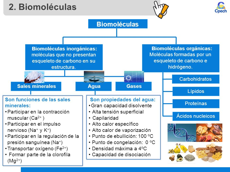Biomoléculas Orgánicas: Carbohidratos Y Lípidos