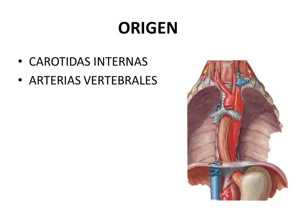 ANATOMIA Y FISIOLOGIA DE LA IRRIGACION CEREBRAL - ppt descargar