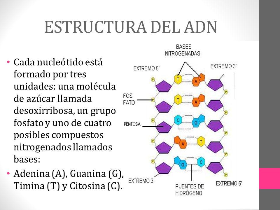 Estructura Y Funcion Del Adn Ppt Video Online Descargar