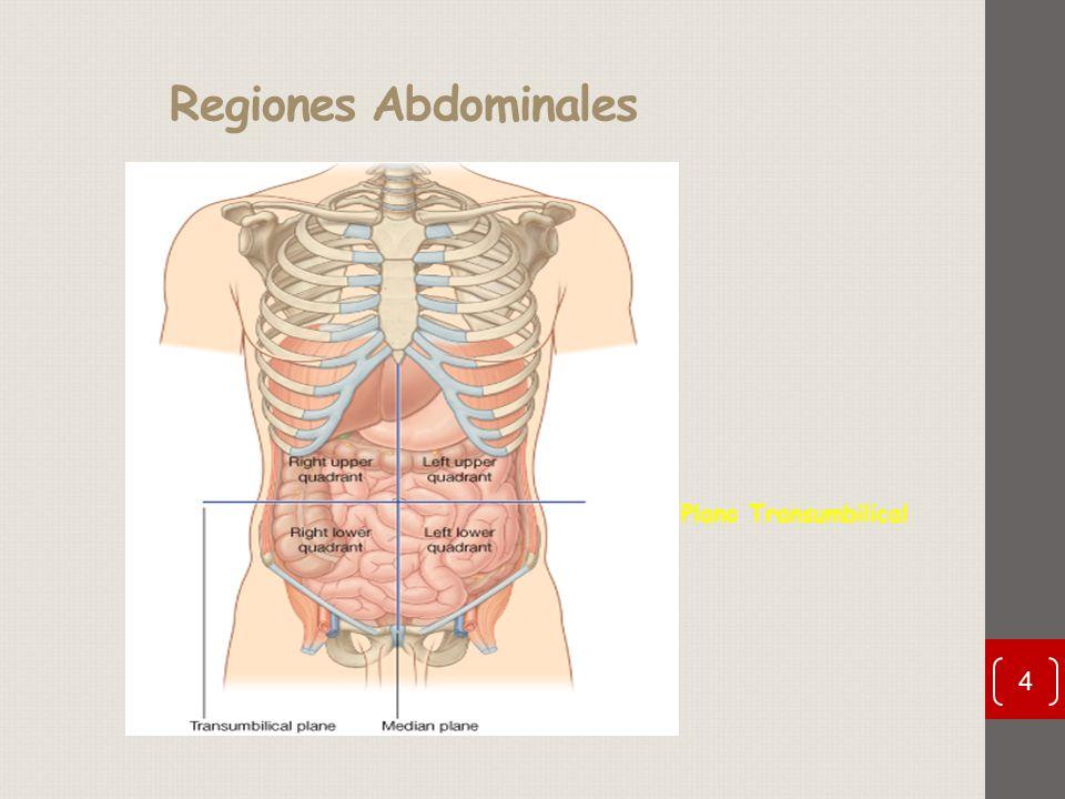 Asombroso Anatomía Cuadrante Abdominal Bosquejo - Anatomía de Las ...