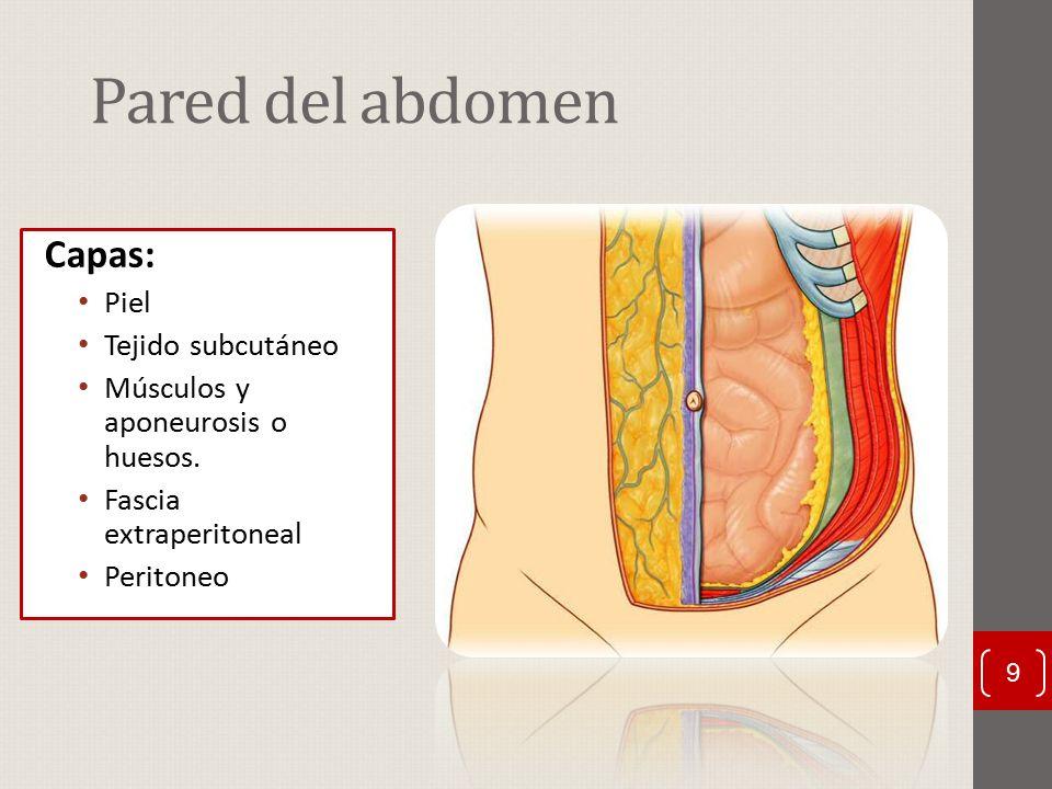 Famoso La Imagen De Capas De La Piel Molde - Imágenes de Anatomía ...