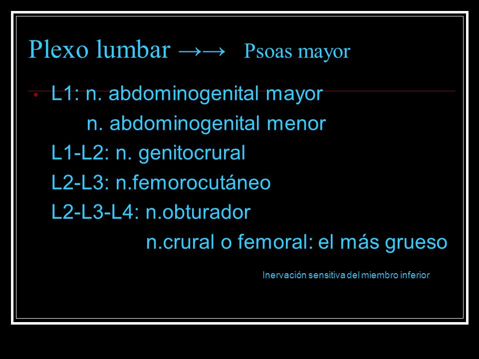 Plexo lumbar →→ Psoas mayor