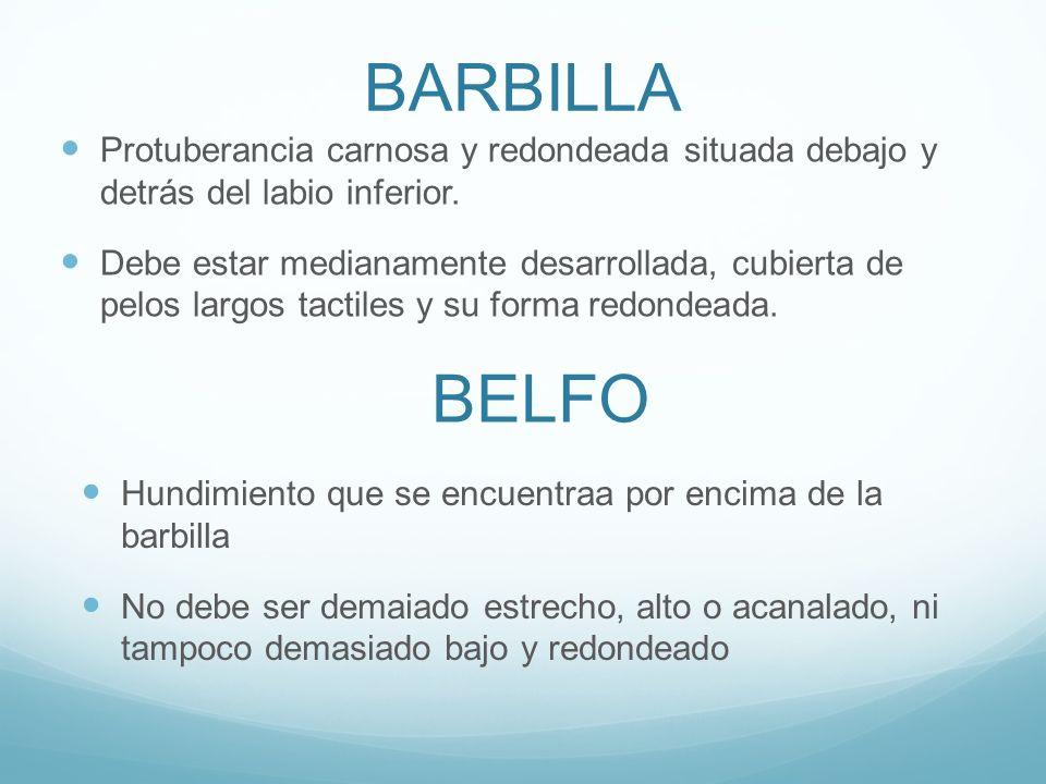 MORFOLOGIA. - ppt video online descargar