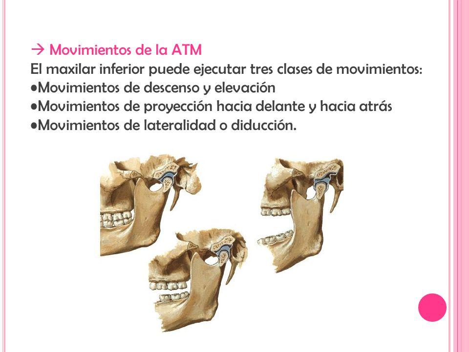 Articulación Temporomandibular - ppt video online descargar