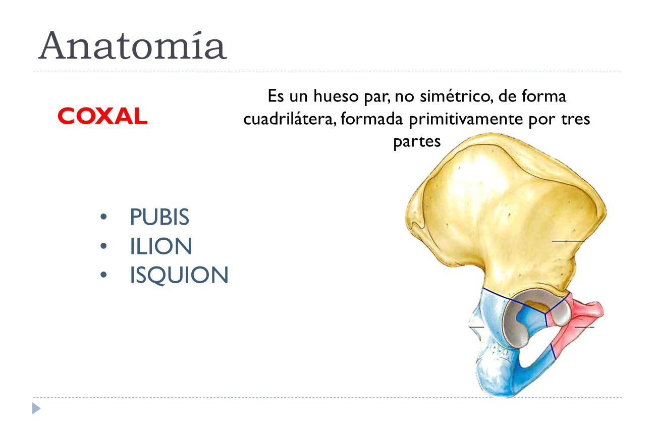 cadera EMBRIOLOGÍA, Anatomía y semiología Mavarez Angela TUTOR ...
