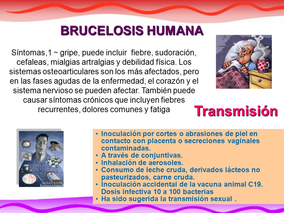 Laboratorio Nacional De Diagnostico Veterinario Lnvd Ppt Video Online Descargar