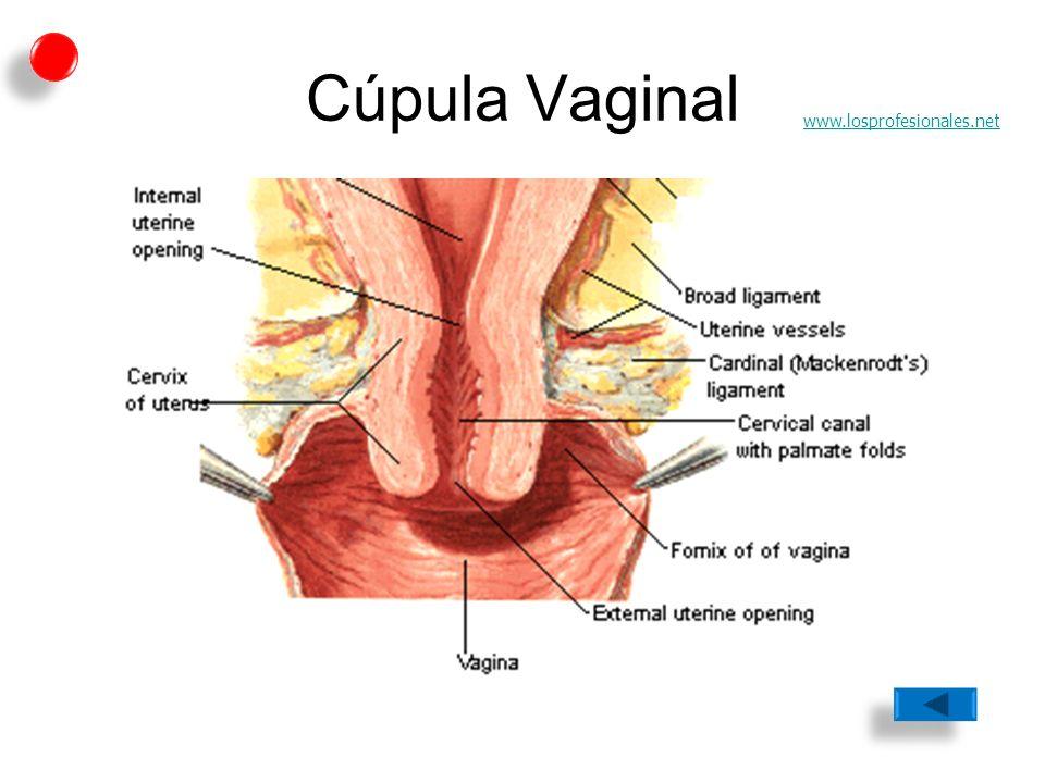 Lujo Anatomía Genital Femenina Embellecimiento - Imágenes de ...