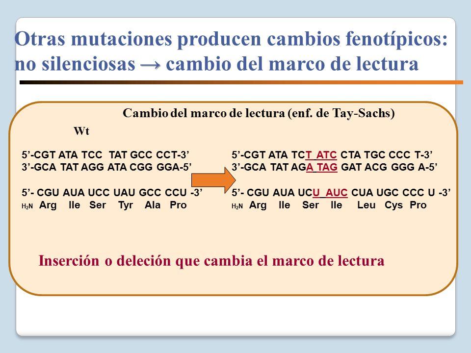 VARIABILIDAD GENETICA Y BIOMEDICINA - ppt descargar