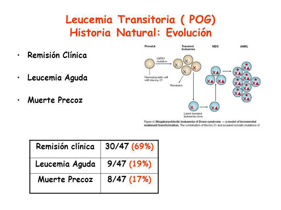 Leucemia Transitoria ( POG) Historia Natural: Evolución