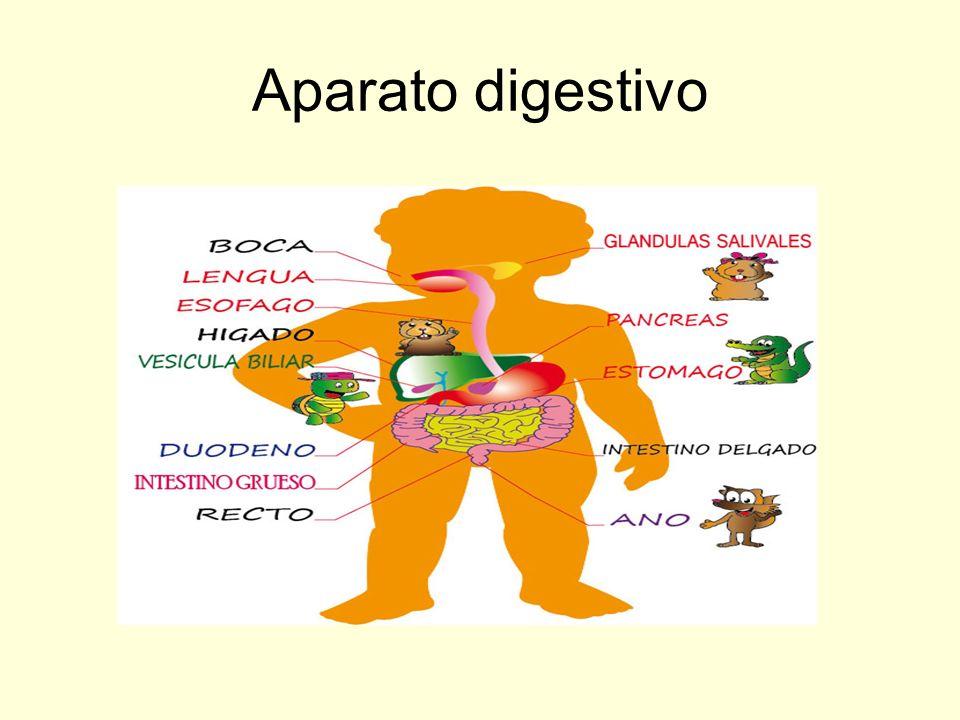 Enseñando a los niños el aparato digestivo - ppt video online descargar