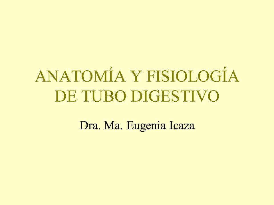 ANATOMÍA Y FISIOLOGÍA DE TUBO DIGESTIVO - ppt descargar