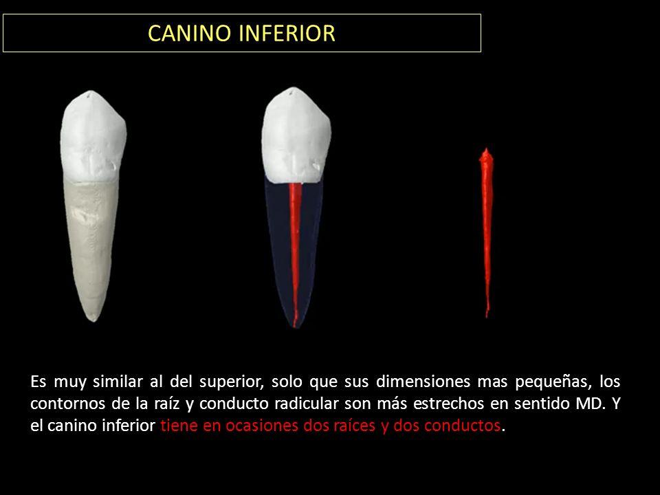 """ANATOMÍA DE LOS CONDUCTOS"""" - ppt video online descargar"""