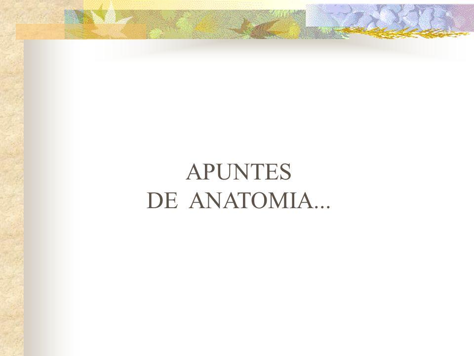 APUNTES DE ANATOMIA ppt descargar