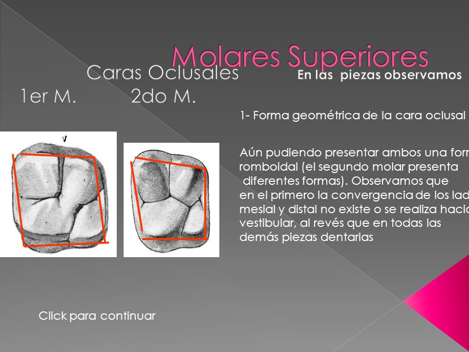 OBSERVACION DE PIEZAS DENTARIAS PERMANENTES - ppt video online descargar